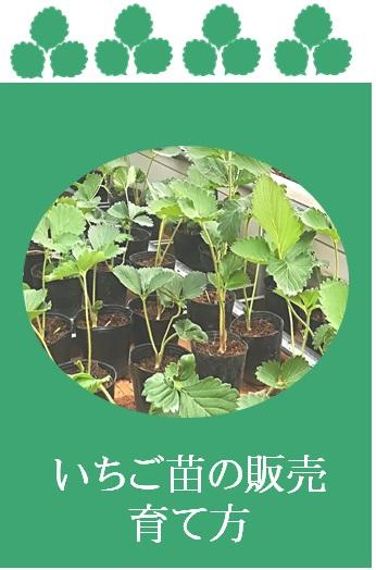 ichigonae_aikon_01